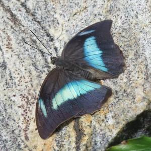 Matt Dickinson Die Macht des Schmetterlings