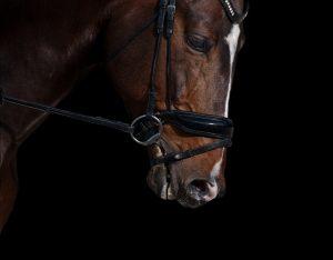 Cecily von Ziegesar Dark horses