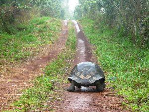 Matthew Quick - Schildkrötenwege oder Wie ich beschloss, alles anders zu machen