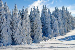 Kyra Dittmann Schneefeuer